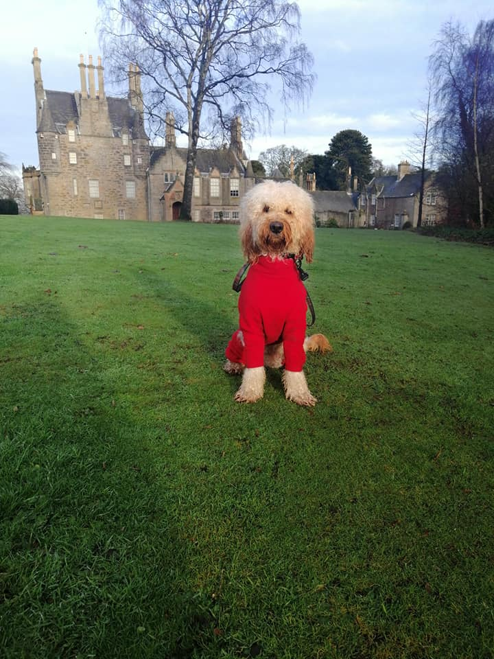#Advent Day 18 and we give you #Santa Paws one of our regular visitors to #LauristonCastle.  #Edinburgh #Christmas   #dogsoftwitter