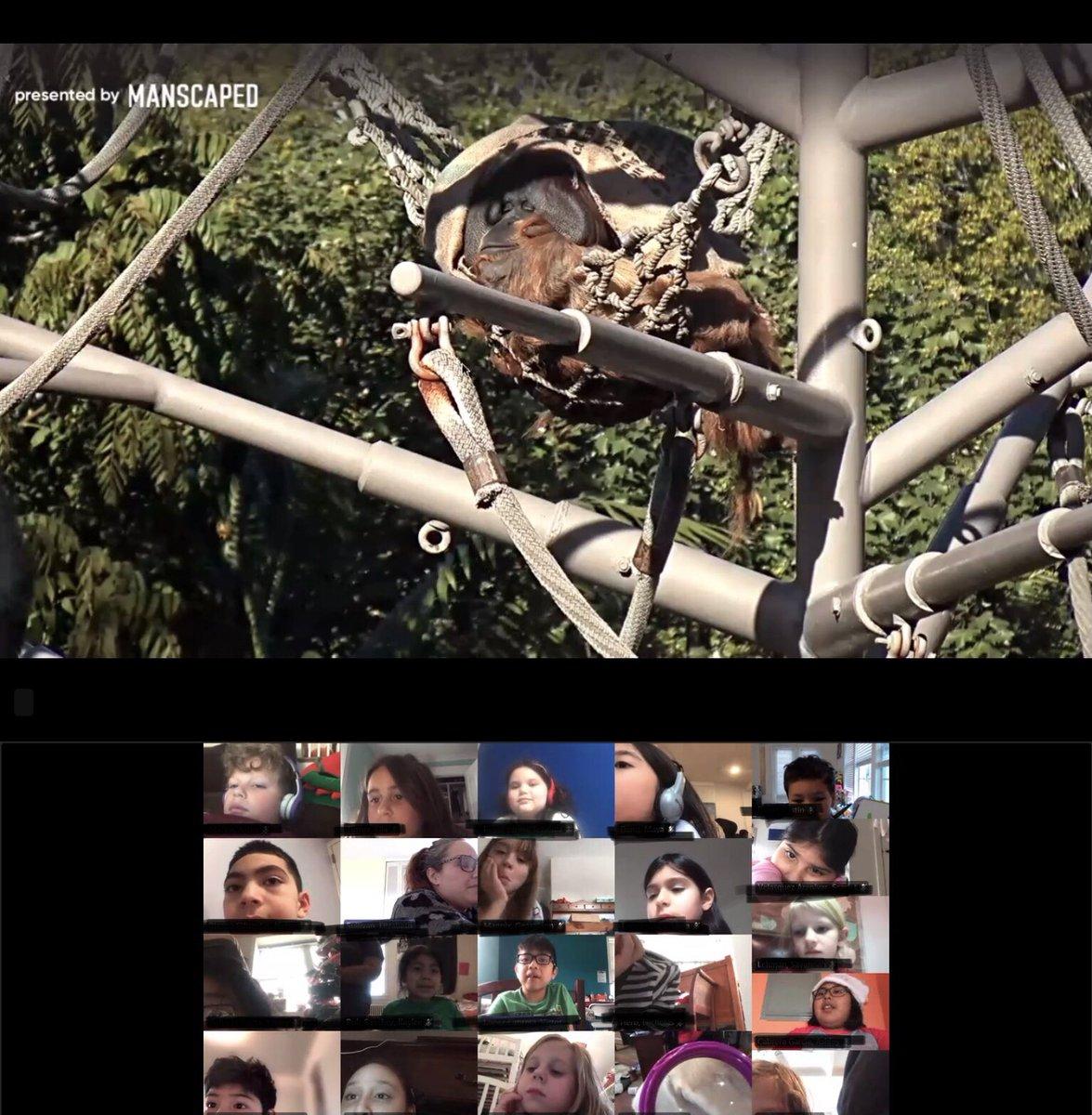 Эти второклассники получили 2-минутную виртуальную экскурсию в зоопарк за то, что познакомились с их минутами Лексии! Продолжайте хорошую работу! #kwbpride #apecam https://t.co/wz15XWrhX1D