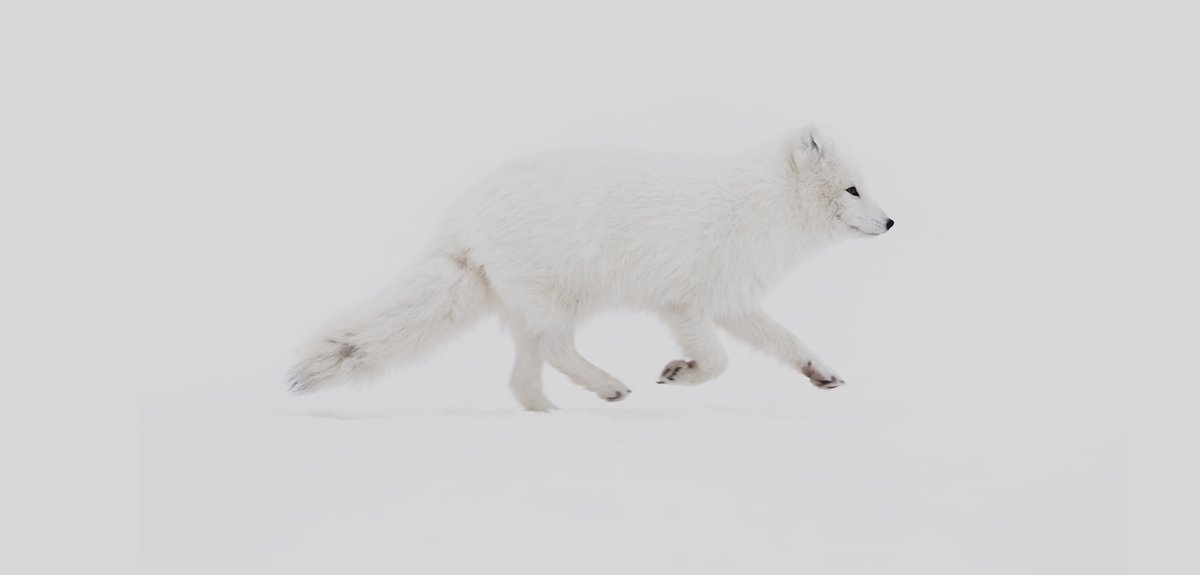 The arctic fox is a symbol for our efforts to protect nature and support initiatives that have the same goal. Learn more about the initiatives we are supporting this year: https://t.co/fCpNLO8Nkc https://t.co/AgUIy9ALks