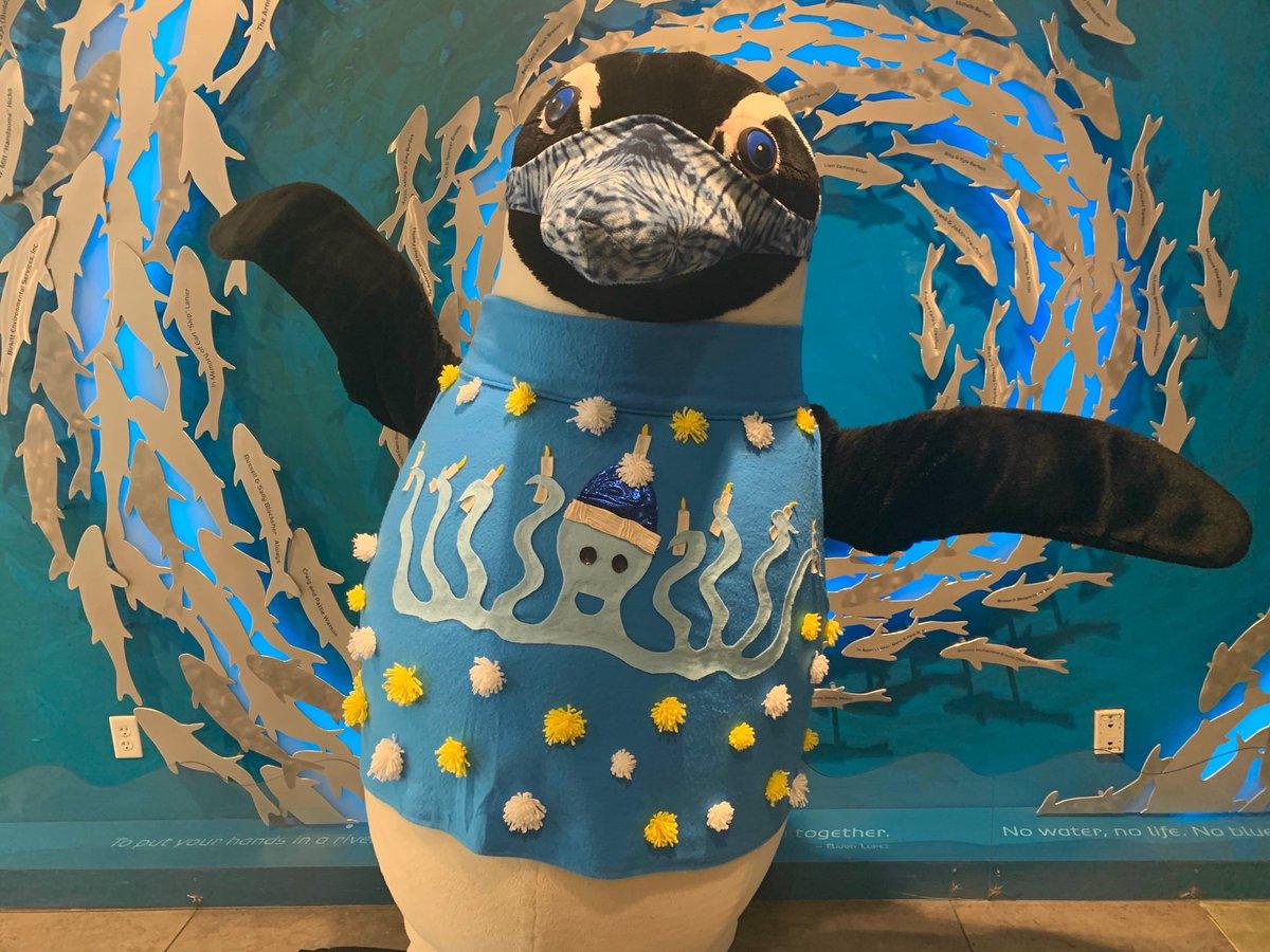Rocky wishes you a very Happy Hanukkah! 🕎🐧 #FloridaAquarium #HappyHanukkah #Penguin