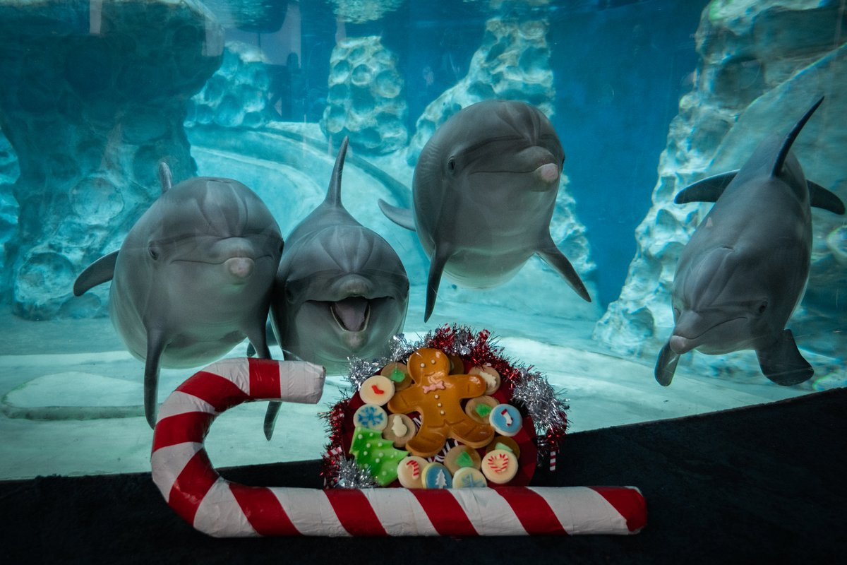 ✨ Happy New Year's Eve! ✨ Our holidays are made brighter by our animals & teams that care for them & our guests 365 days a year! 🐬 It's your last chance to visit us in 2020! We're open 8 a.m. - 4 p.m.