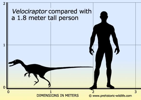 2 pic. We all know that Jurassic Park got Velociraptors really wrong, right?   Welp. What they SHOULD