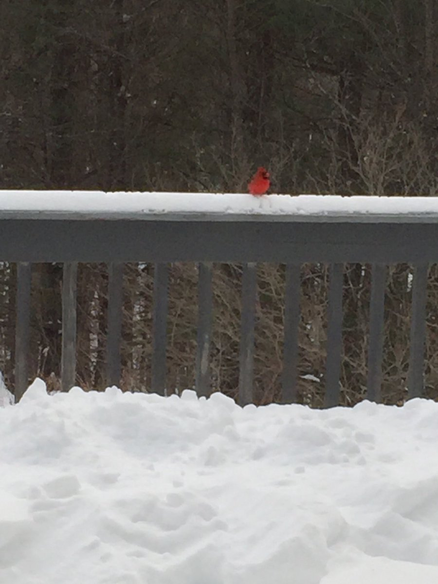 test Twitter Media - RT @mroth78: Cold Cardinal outside our window.    ⁦@wesleyan_u⁩ https://t.co/BH4JbfrxAc