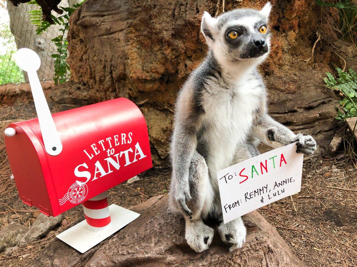 We love you snow much Santa!🎅❣️#FloridaAquarium #Lemurs #Santa