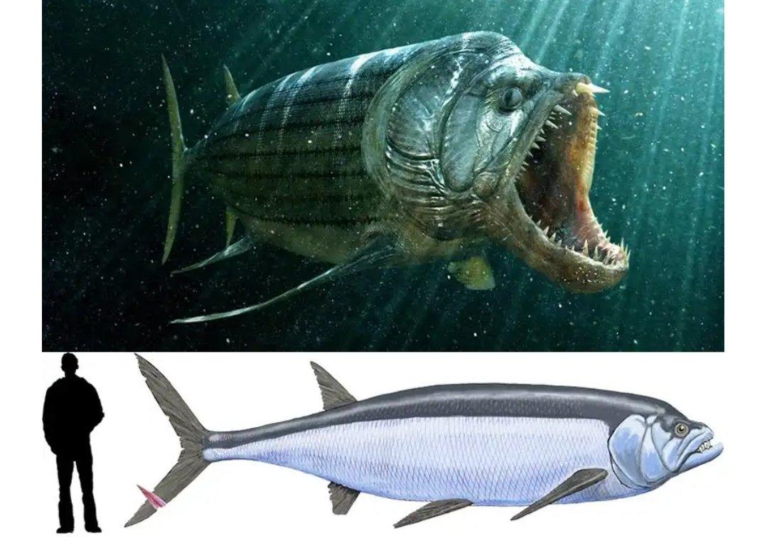xiphactinus fish - 800×634