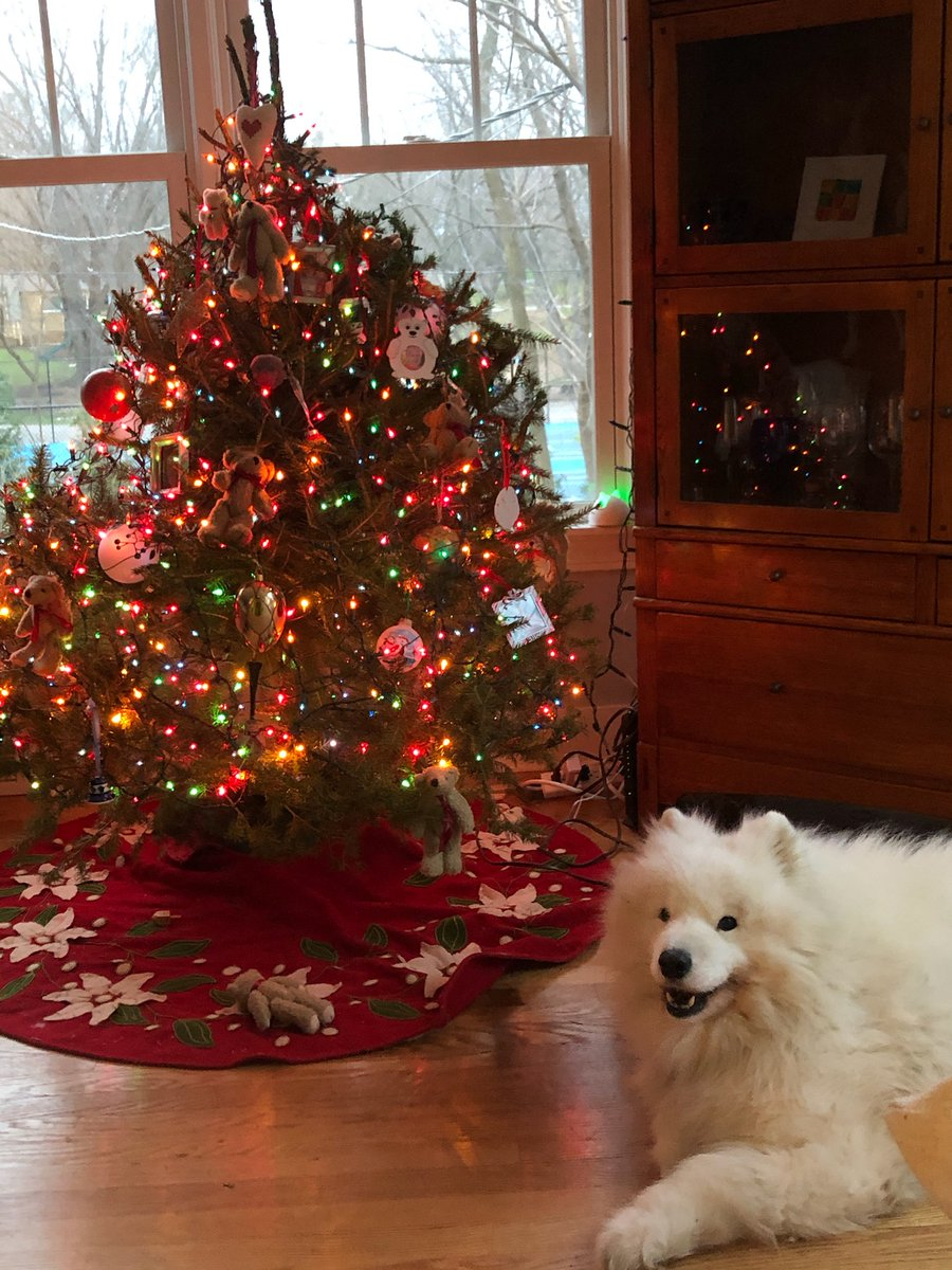 @kellyclarkson @YouTube Same tree.. Different animals. And last one new xmas gift.