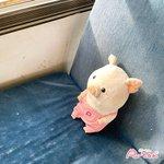 puuton_ndiのサムネイル画像
