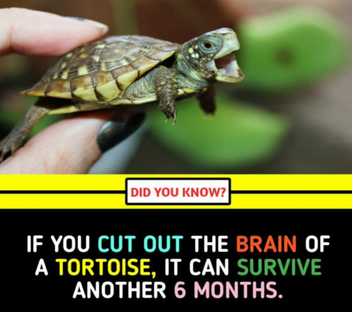 @Varun_dvn @PrimeVideoIN @vashubhagnani @jackkybhagnani @honeybhagnani (Pls follow for more such facts)🙏🙏🙏🙏🙏🙏