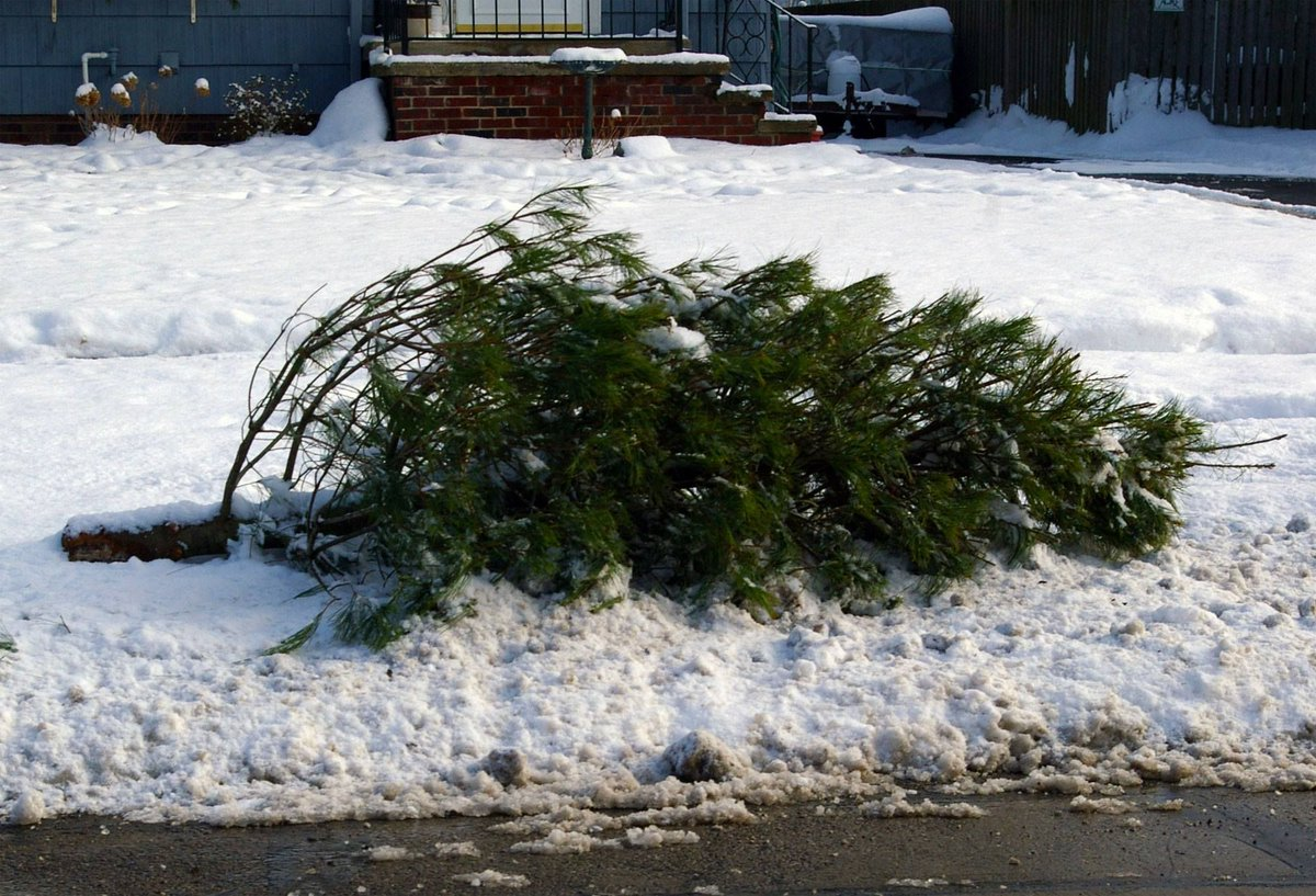 Ankeny Christmas Tree Pickup 2021 Uzivatel City Of Ankeny Na Twitteru Didyouknow The City Of Ankeny Offers Free Curbside Pick Up For Christmas Trees Each Year Ankeny Residents Please Place Your Tree Curbside No Later Than