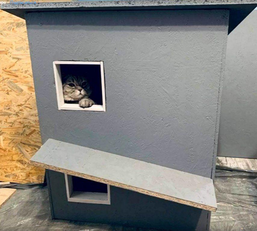 Львів стає інклюзивнішим для котів