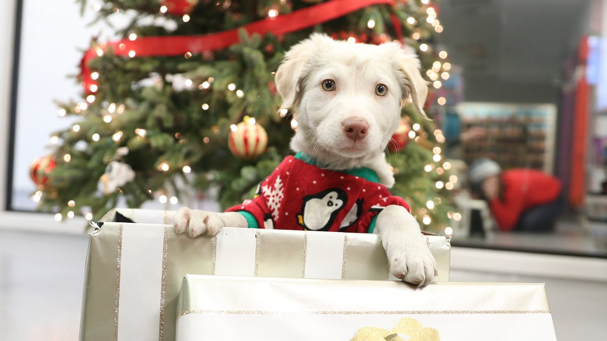 You can make a homeless pet's Christmas bright by purchasing them a toy or treat from our Amazon wish list!  >>>  And don't forget to select the Atlanta Humane Society as your Amazon Smile charity to make twice as many holiday wishes come true!