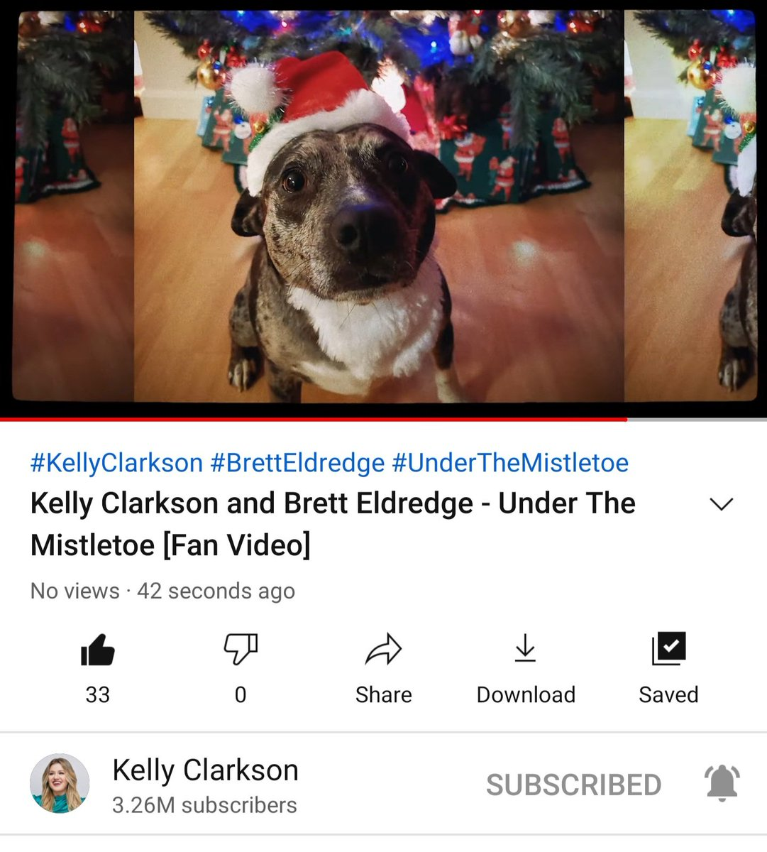 @kellyclarkson @amazonmusic My rescue pup Blanche made it into the fan video!  What a special moment!  Thank you and Merry Christmas @kellyclarkson !!!!  🎄☃️🤶🎅🎄