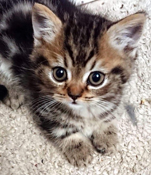 """2 pic. PS... We're getting a new kitten.. say hello to our new addition, """"Lil' Biggie Smalls"""" and the"""