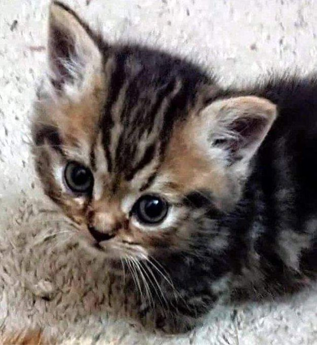 """1 pic. PS... We're getting a new kitten.. say hello to our new addition, """"Lil' Biggie Smalls"""" and the"""