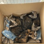 守谷市役所で子猫を保護!里親を探しています。