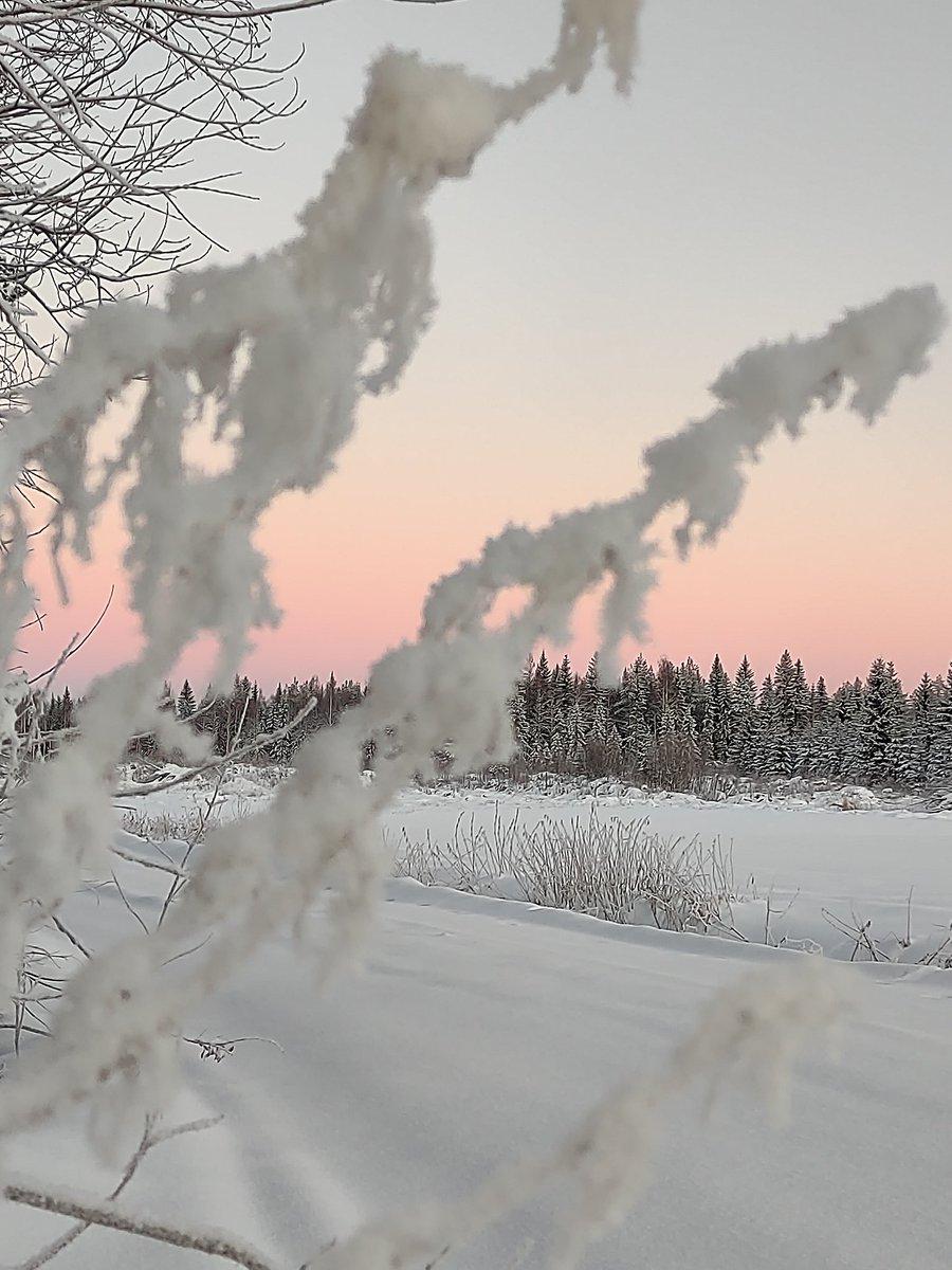 Talvipäivän taivaanranta. Ei, ei minun tarvitse kuin katsoa... #kainuu