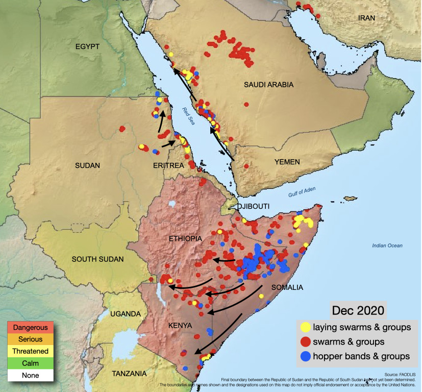 Numerous immature swarms formed in eastern Ethiopia & central Somalia during December, which moved to southern Ethiopia, reaching northern Kenya.  More swarms will arrive.  Check the latest #DesertLocust Watch report👉🏾