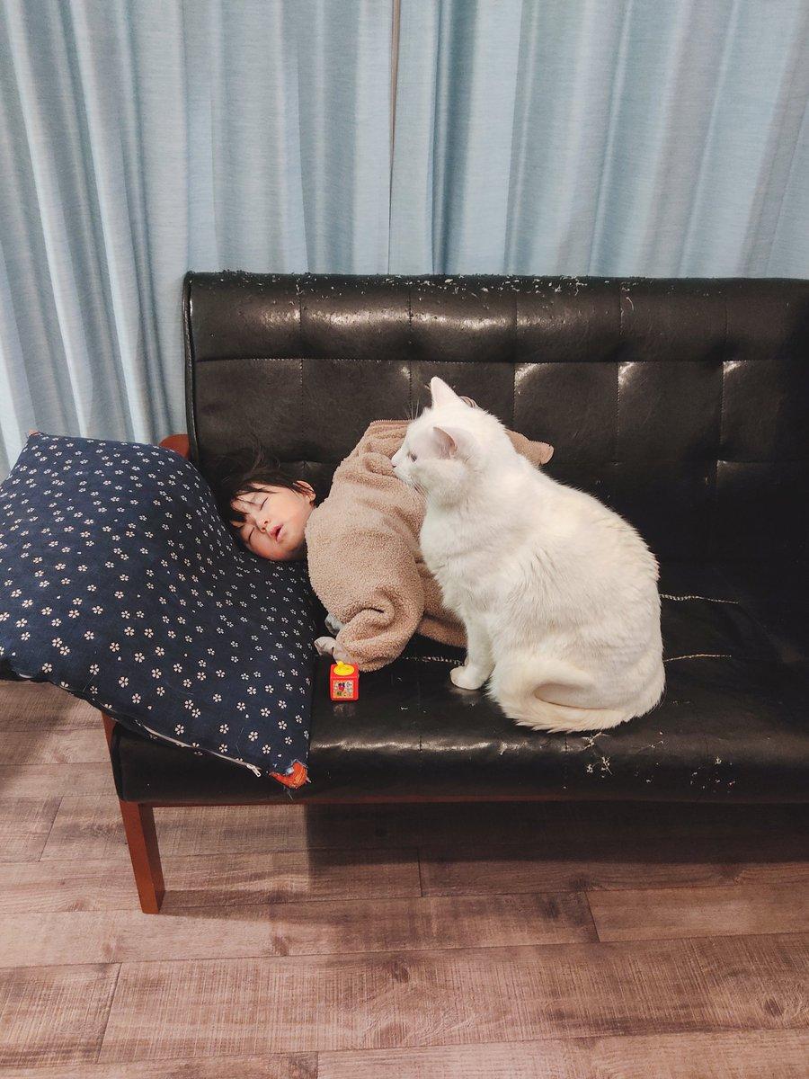 ソファーで寝落ちしてしまった娘が落ちないように、ずっとベッドガードしてくれてる