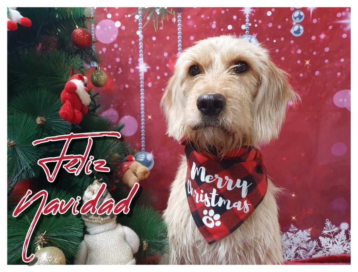 Hay alguien que quería pasarse por aquí y daros las gracias por todo lo que nos habéis ayudado en sacarla de la calle y ponerla a salvo, a ella y a sus #Sabeliños. Feliz Navidad os desea #Sabela @survagal @LolaFdzCampillo @lemus_emilia @lemus_emilia @mvillafruela @BrunaHusky