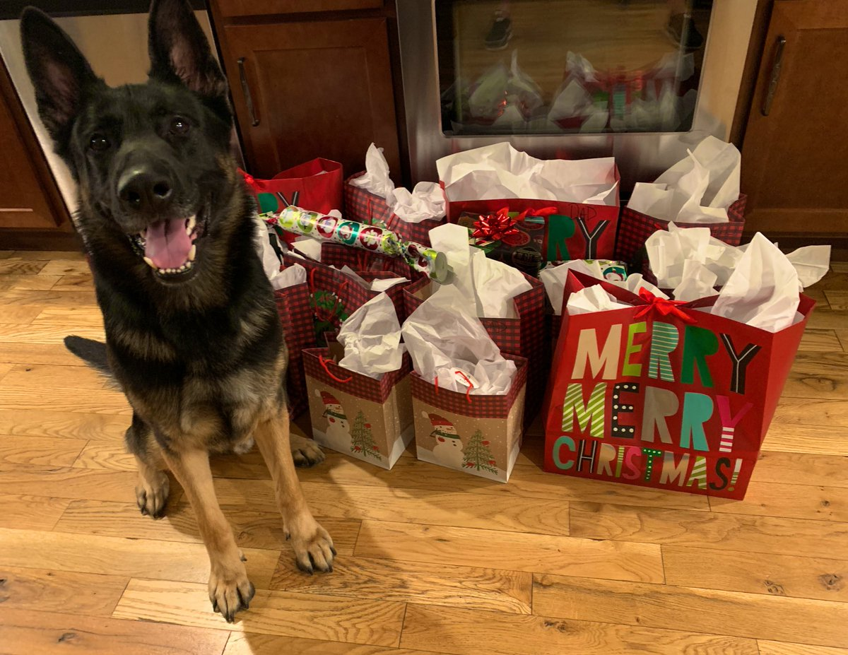 My boy is celebrating his birthday and says the gifts are ready!!!! #ChristmasEve #ChristmasDog #MerryChristmas