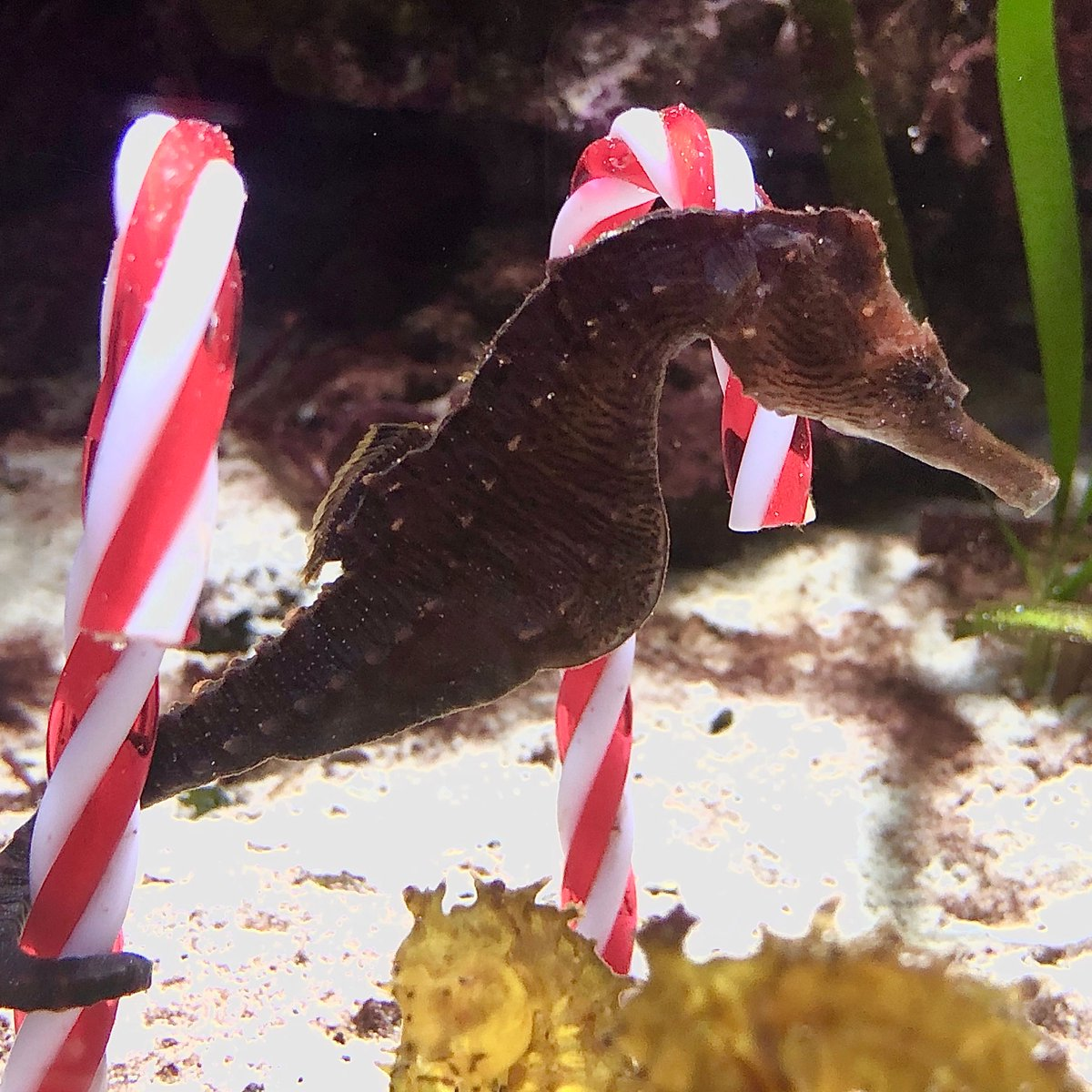 From our Shedd Aquarium family to yours, have a safe and happy holiday season.