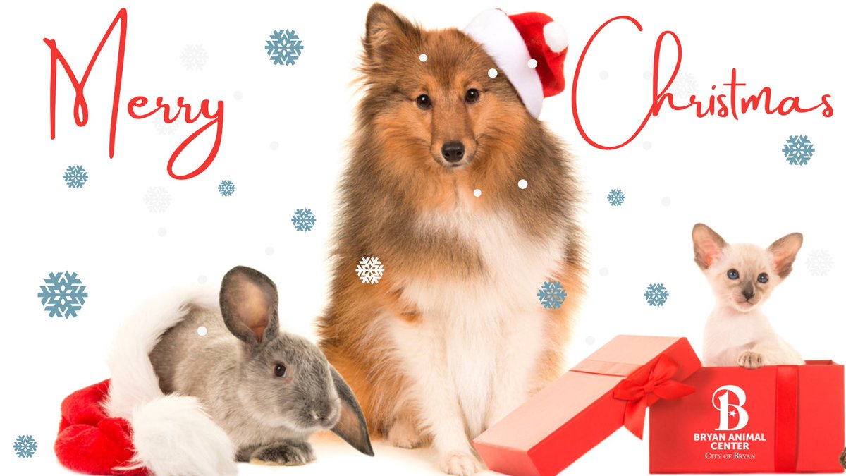 The Bryan Animal Center would like to wish everyone a Merry Christmas!!🎄🐾 #MerryChrismas #happyholidays #bryananimalcenter #cityofbryan #adopt #rescue #family #ChristmasDay #ChristmasMorning