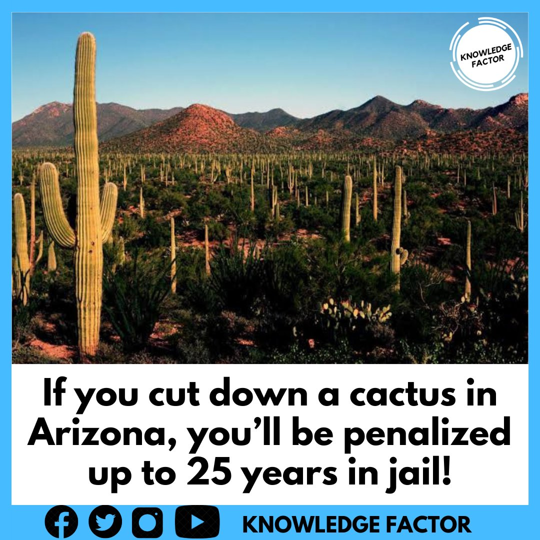 Instagram:  Facebook:   #wildlife #forest #forests #Arizona #ArizonaHearing #ArizonaHearings #arizonastate #Cactus #DesertStorm30 #penalties #Jail #prison #law #strictly #deforestation #knowledge #Fact #Facts