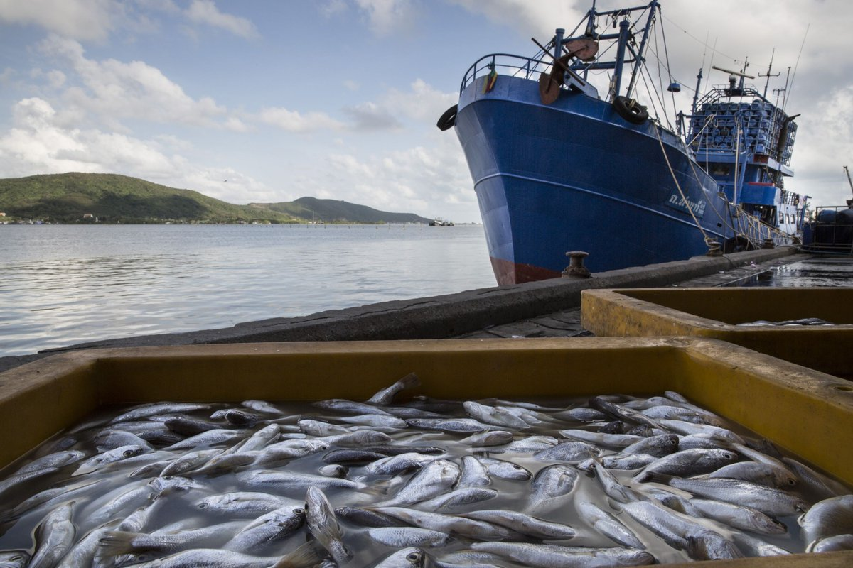 Slavery and overfishing on the high seas can't hide from these researchers