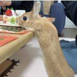 クリスマス会はウサギによって?文字通りケーキがぶっ飛ぶくらい楽しい会に!
