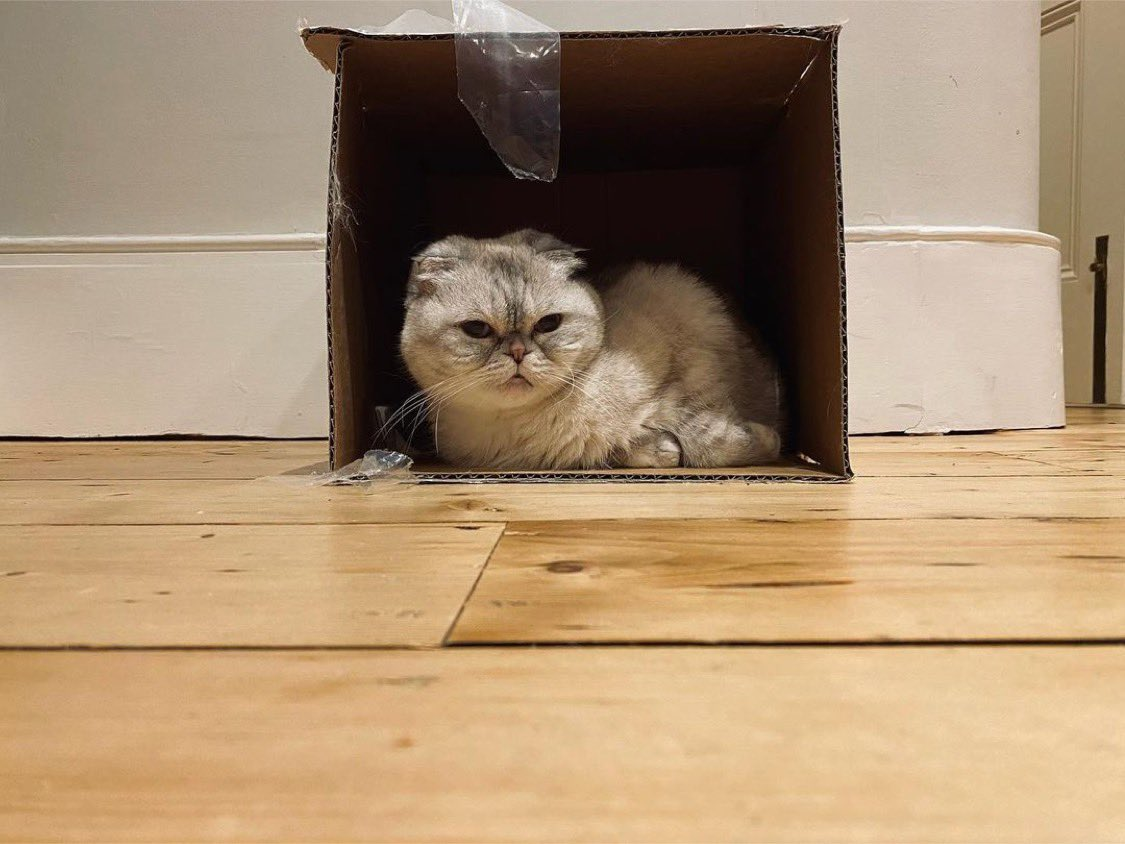 Taylor Swift's Boxing Day Cat Picture