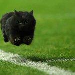 ペンリス・パンサーズは黒豹をエンブレムにしてる!偶然にも黒猫が乱入