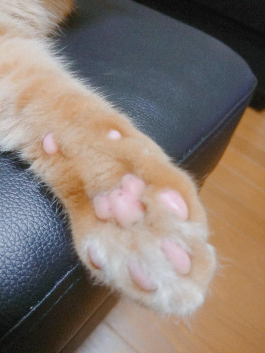 これには猫も満足?マットの下が猫の迷路になっているベッド!