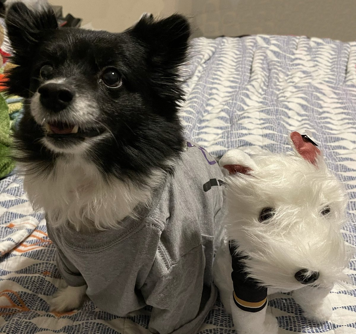 Then, Biped Daddy had gotten me my friends, @BarkAndreFurry & @DekeHenriFurry, T-Shirt to support their charity @TRFdotORG . #SlayCancerWithDragons