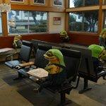 駅の待合室にカエル!?印南駅にリアリティ抜群なカエルがいると話題沸騰中!