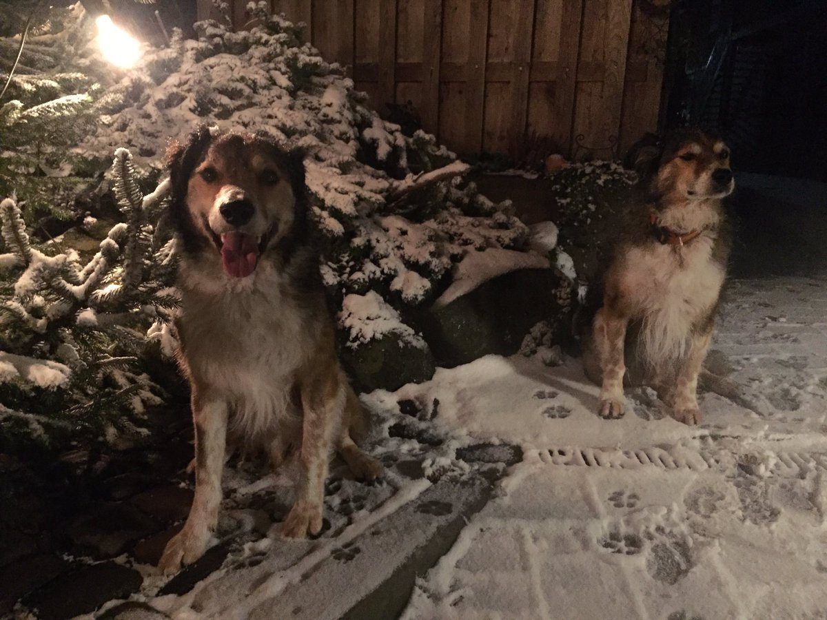 Some very good dogs in the snow.