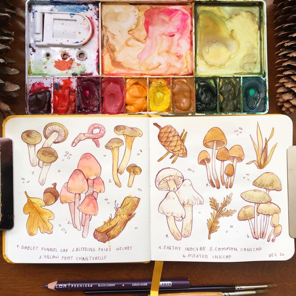 Replying to @loonpflug: been doodling in my sketchbook a lot these days and all i can seem to draw is mushrooms 🌿✨
