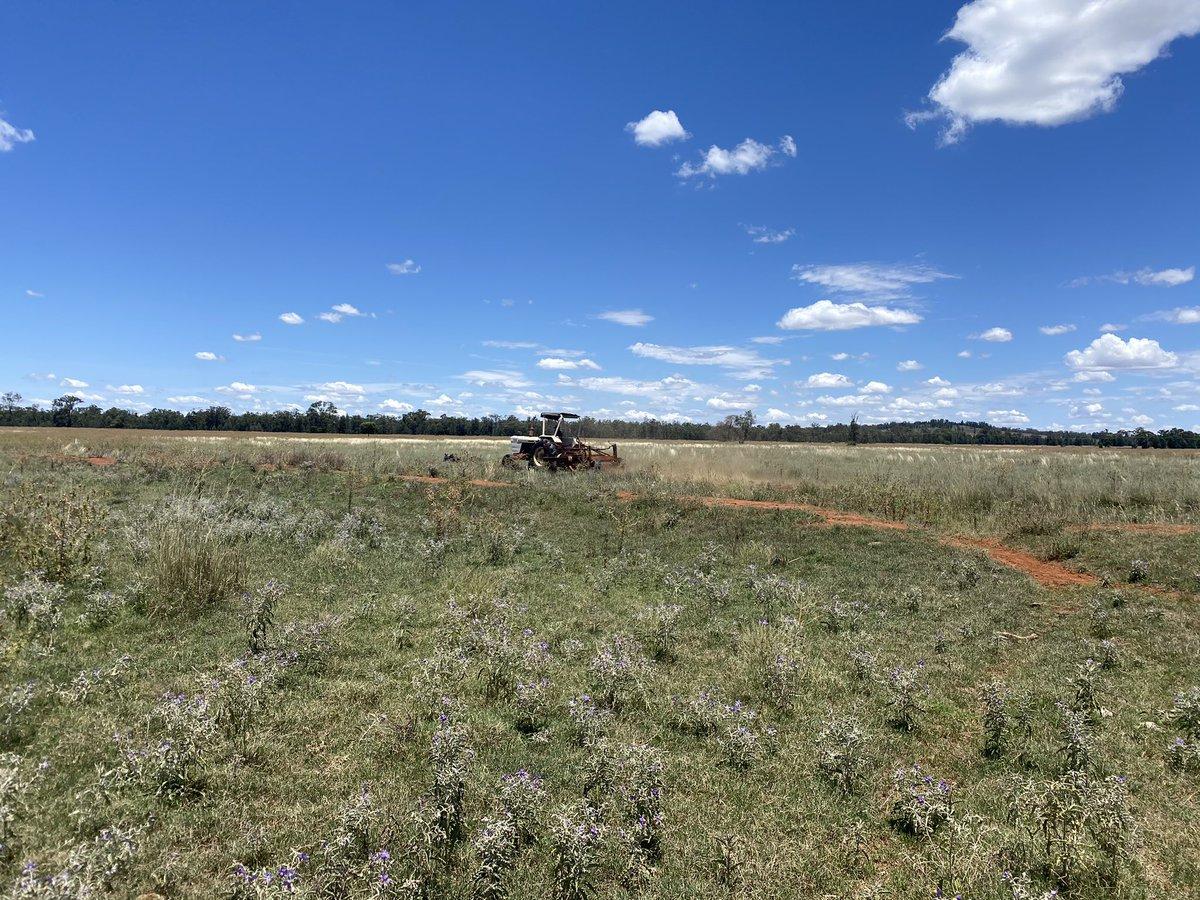 Beautiful day for plowing firebreaks