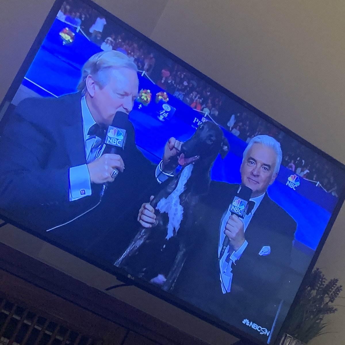 I was today years old when I found out Mr. Peterman is the ACTUAL HOST of the #NationalDogShow