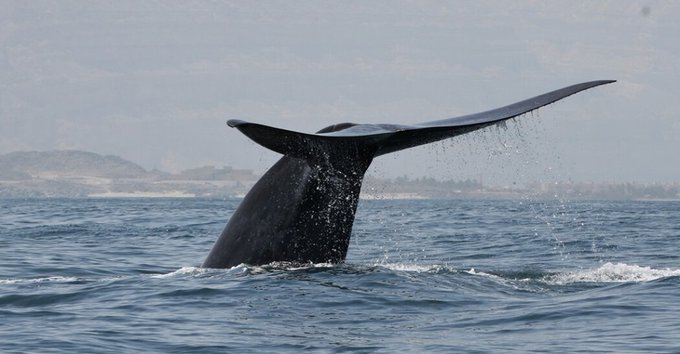 Does anyone else get turned on from seeing a whale's tail? or is only me? There's something phallic about
