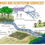 Image for the Tweet beginning: Ecosystem services are the many