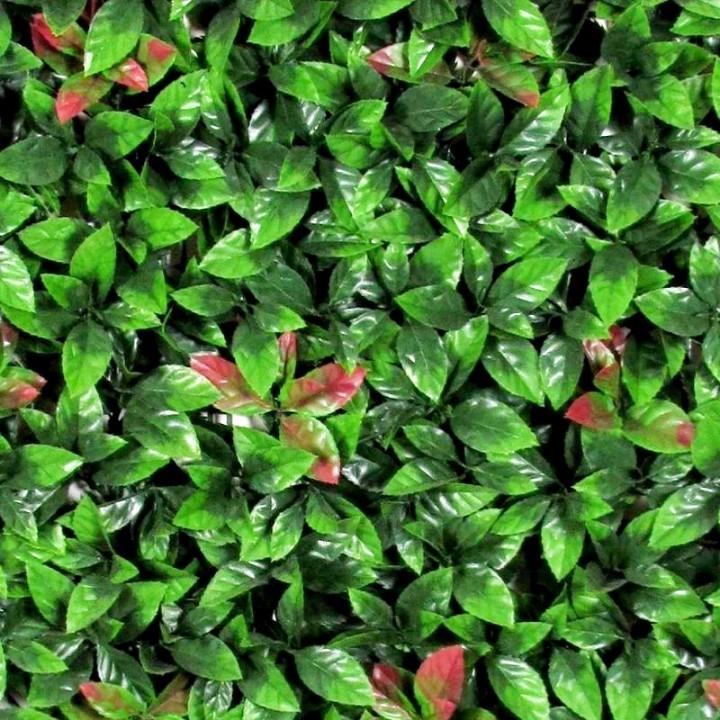 test Twitter Media - Wil jij je interieur of tuin  een positieve kleurrijke boost geven?🌺  Dit kan met de Wandmat Photinia #kunsthaag met afmeting 1m2.🌿  In Februari weer verkrijgbaar!  https://t.co/0UHM8V4q3V