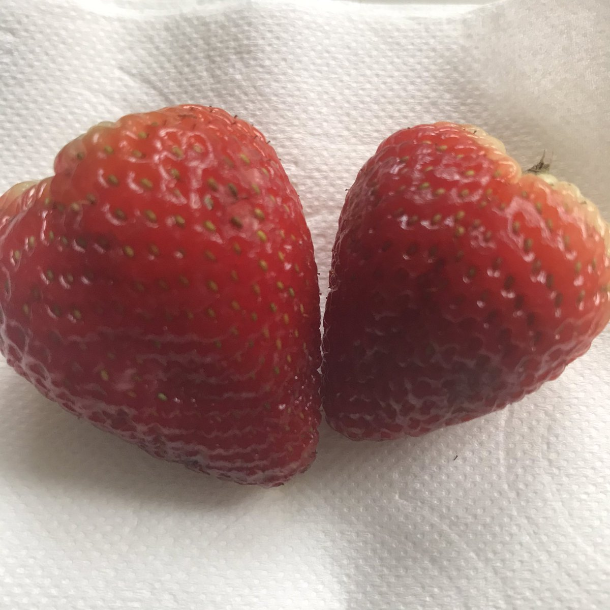 @RyanSeacrest eating Strawberries ,while i listen to u on the radio