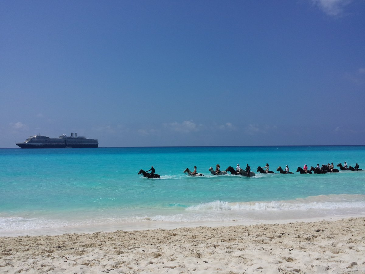 I love @HALcruises Half Moon Cay! Especially the traffic jams! Wonderful for @CarnivalCruise #cruise passengers when they visit too!