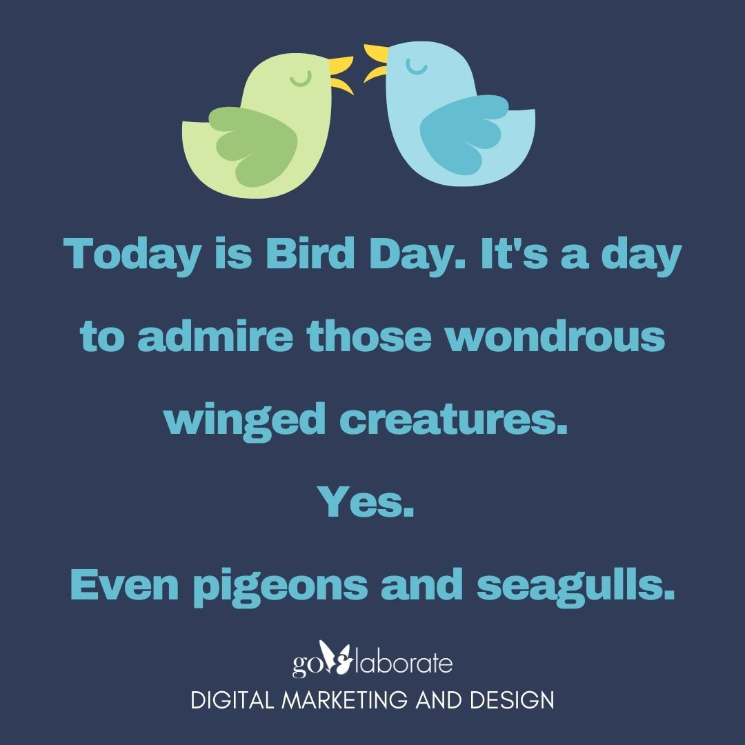 Today is Bird Day. It's a day to admire those wondrous winged creatures. Yes. Even pigeons and seagulls.  #tuesdayvibe #tuesdaymotivations #TuesdayFeeling #birds #DigitalMarketing #goElaborate