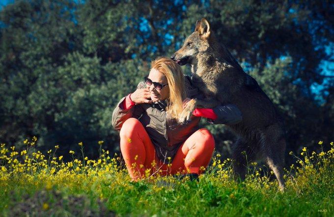 Qui a peur du grand méchant loup!? C est pas moi c est pas moi... #diaconlobos #marleneysulobo https://t