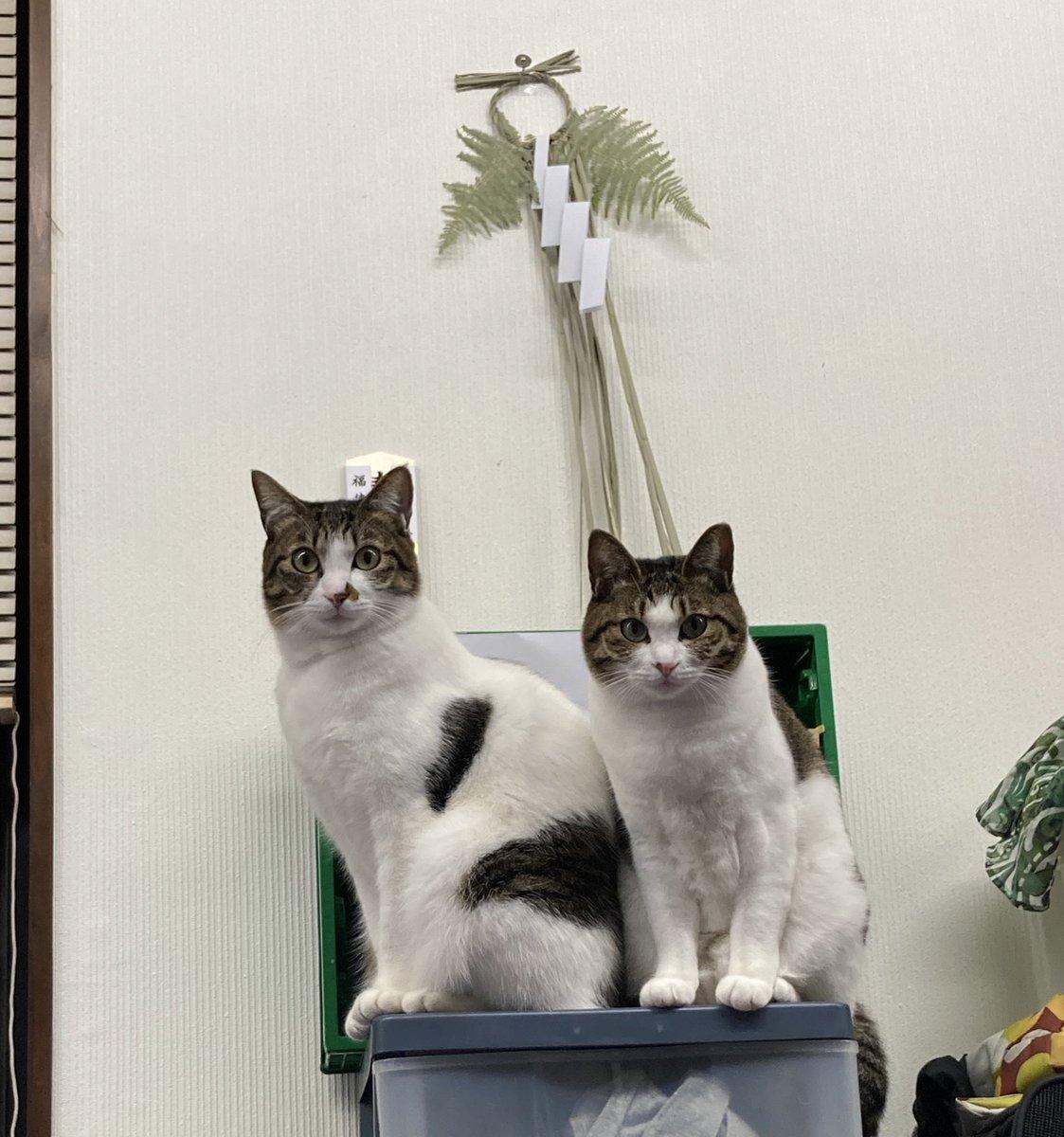 条件 引き取り 保健所 猫 猫を保健所から引き取りたい?特徴や注意点から購入との違いを解説!