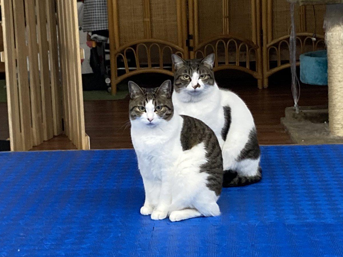 条件 引き取り 保健所 猫 猫の里親条件が厳しい理由は?その裏側にあるものとは