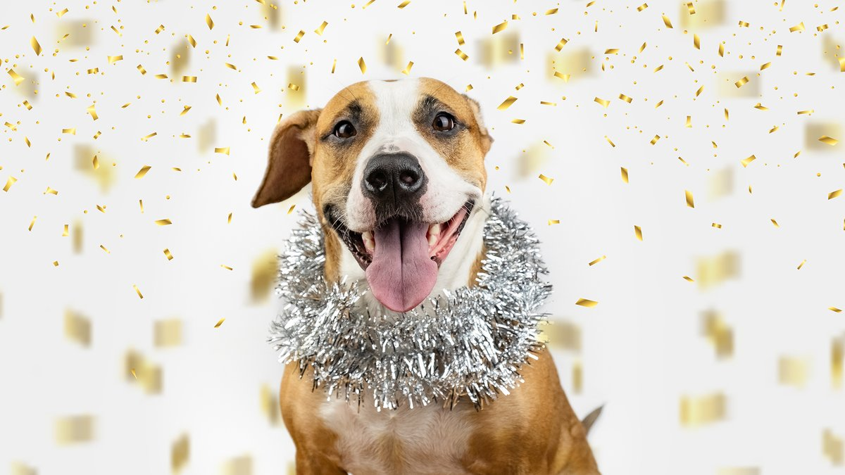 Ring in the New Year with a new BFF!  Adopt at our West Midtown or Alpharetta locations tomorrow to start 2021 off right! Details below:  West Midtown: 12:00 - 3:00 p.m. 981 Howell Mill Rd.  Alpharetta: 11:00 a.m. - 3:00 p.m. 1565 Mansell Rd.