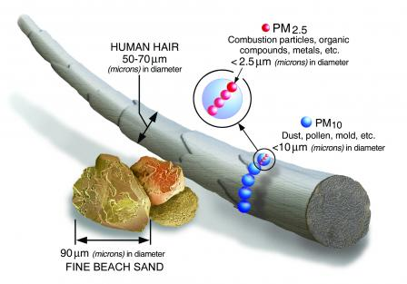 A lot of these papers talk about PM2.5 and, by this stage, you're probably wondering what it is and how big a micron (1μm) is. The EPA has the handy diagram below. The WHO recommend keeping PM2.5 below 10μg/m3. The message is: keep PM levels in check. https://www.who.int/news-room/fact-sheets/detail/ambient-(outdoor)-air-quality-and-health