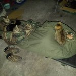 寒空の中ガレージで寝た結果?猫たちが集まってきたw